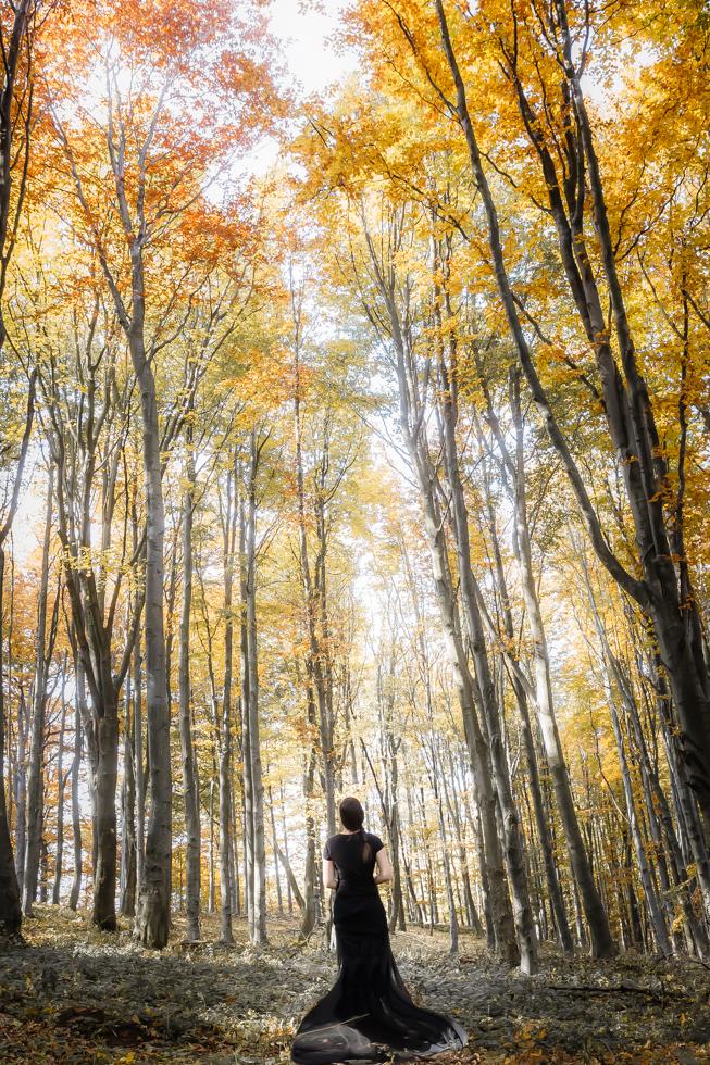 Autumn trees of Kékes